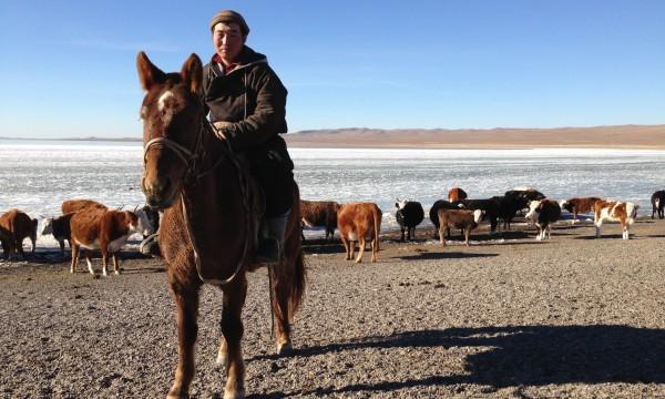Was haben rappende Pferde im Rückspiegel mit der Mongolei zu tun? (Ich verrat´s dir … du weißt schon wo)