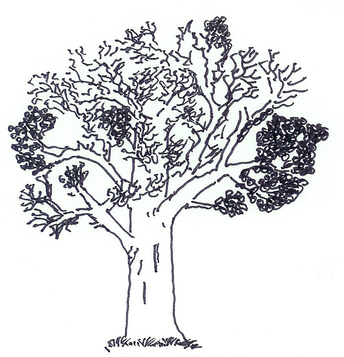 Lebensbaum - Buch - Zeitmanagement - Selbstmanagement - Motivation - Selbstmotivation - Konzentration - Studium - Lernen - Ratgeber Dr. Martin Krengel