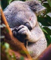 Besser schlafen - schnell einschlafen und lange durchschlafen - Tipps fuer besseren Schlaf von Dr Martin Krengel1